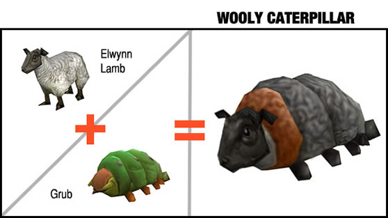New species: Wooly Caterpillar