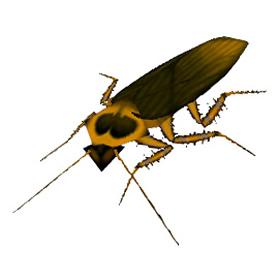 Nether Roach