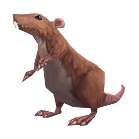 Prairie Mouse