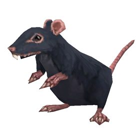 Stowaway Rat