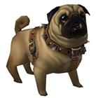 Perky Pug